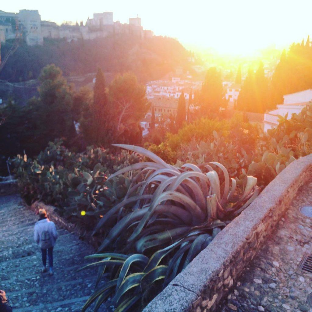 cactus granada alhambra