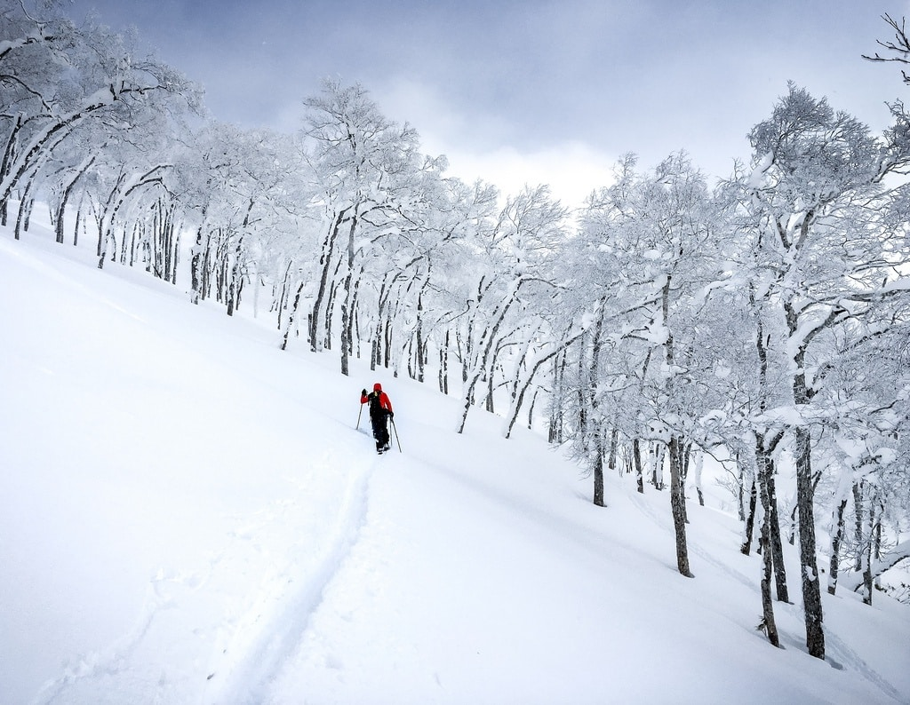 skiing in snow