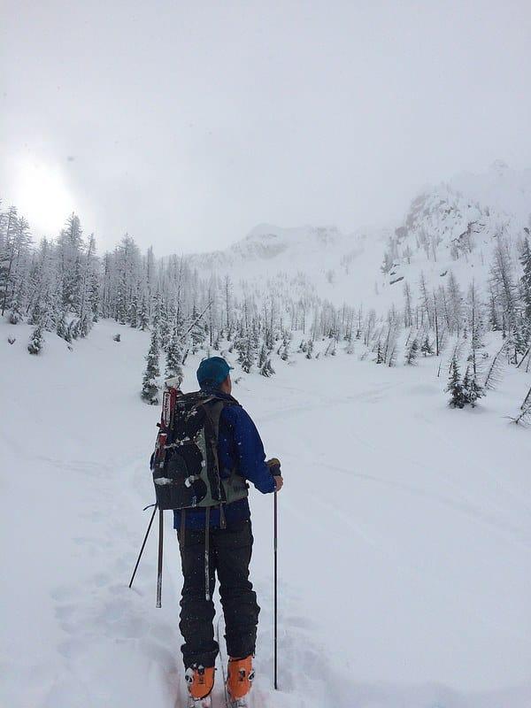 ski tree cover