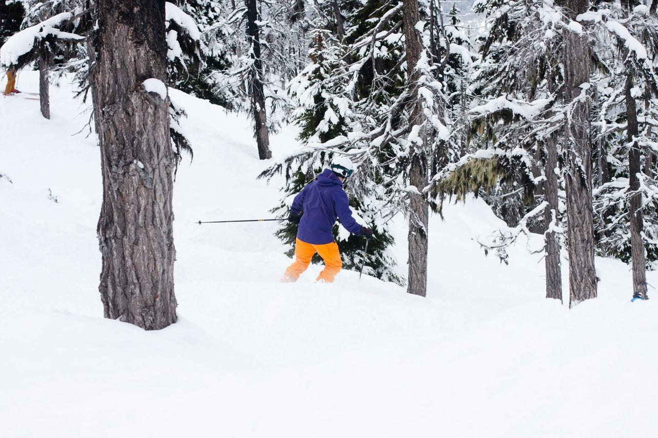 skier forest
