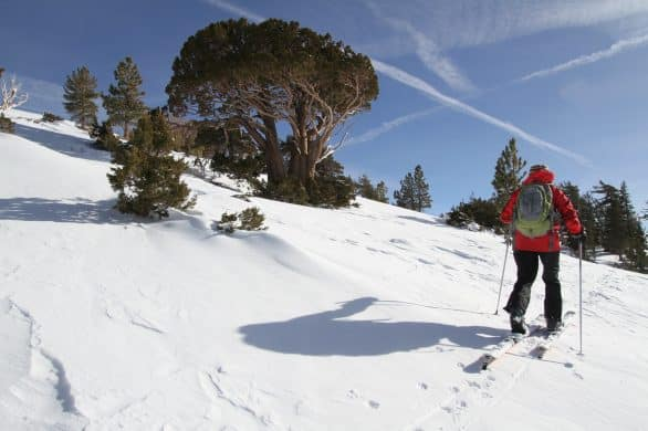 The Major Differences Between EVERY Ski (13 Types)